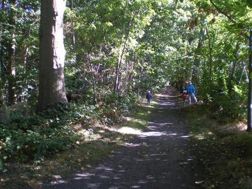 Evergem Wippelgem kasteelpark Amerikaanse eikendreef (1)