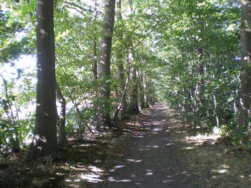 Evergem Wippelgem kasteelpark Amerikaanse eikendreef (2)