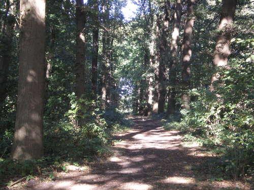 Evergem Wippelgem kasteelpark bosdreven (1)