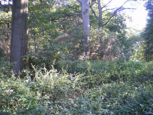 Evergem Wippelgem kasteelpark bosdreven (11)