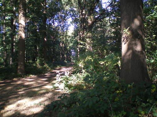 Evergem Wippelgem kasteelpark bosdreven (13)