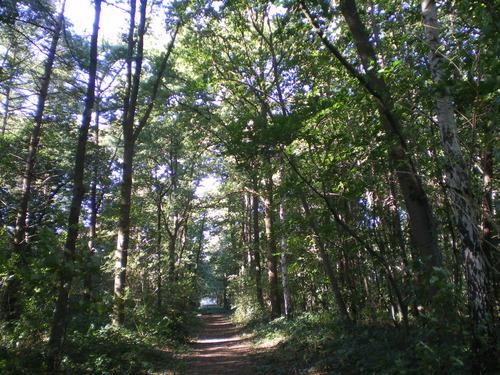 Evergem Wippelgem kasteelpark bosdreven (3)