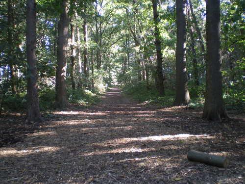Evergem Wippelgem kasteelpark bosdreven (4)