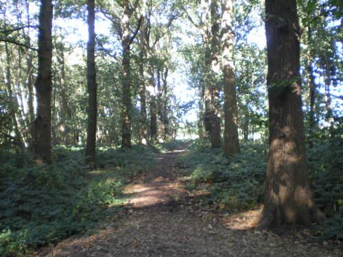 Evergem Wippelgem kasteelpark bosdreven (6)