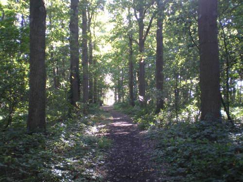 Evergem Wippelgem kasteelpark bosdreven (7)