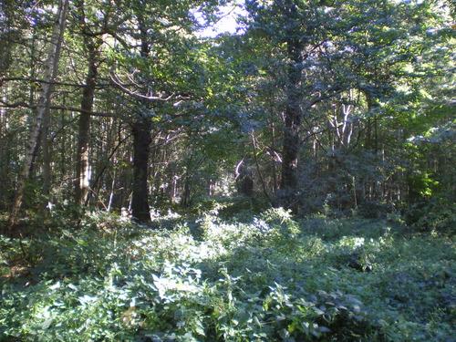 Evergem Wippelgem kasteelpark bosdreven (9)