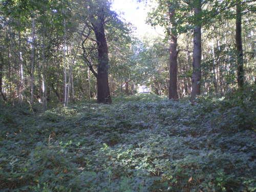 Evergem Wippelgem kasteelpark opgaande tamme kastanje (2)