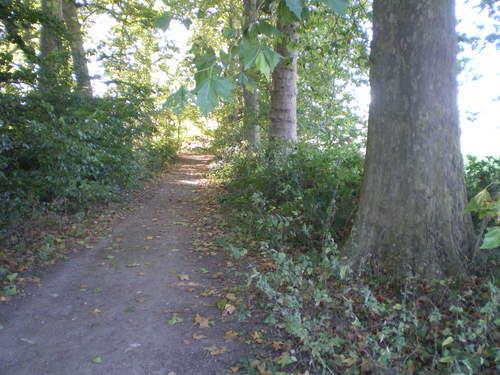 Evergem Wippelgem kasteelpark platanendreef langs walgracht (4)