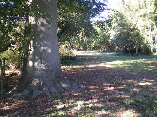 Evergem Wippelgem kasteelpark twee opgaande beuken in zichtdreef (2)