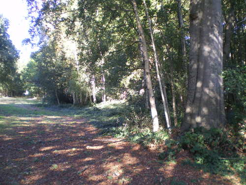 Evergem Wippelgem kasteelpark twee opgaande beuken in zichtdreef (3)