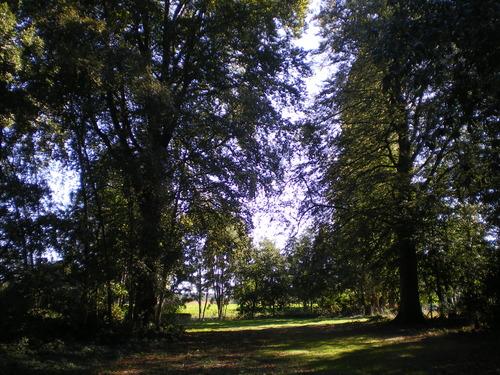 Evergem Wippelgem kasteelpark twee opgaande beuken in zichtdreef (4)