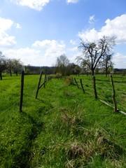 Voeren 's-Gravenvoeren Graspad als doorsteekweg (3) (https://id.erfgoed.net/afbeeldingen/257416)