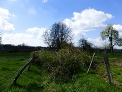 Voeren 's-Gravenvoeren Graspad als doorsteekweg (2) (https://id.erfgoed.net/afbeeldingen/257417)