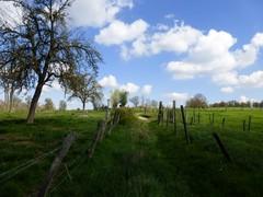 Voeren 's-Gravenvoeren Graspad als doorsteekweg (1) (https://id.erfgoed.net/afbeeldingen/257418)