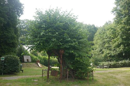 Wijnegem Turnhoutsebaan Oude veteraanlinde Wijnegemhof (6)