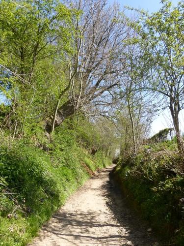 Voeren Sint-Martens-Voeren Paralleweg naar la Verte Heydt (3)