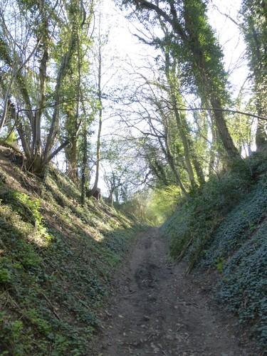 Voeren Sint-Martens-Voeren Weg naar Ulvend (5)