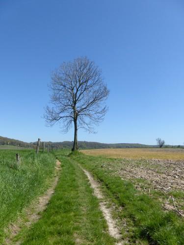Voeren Sint-Martens-Voeren Doorsteekweg naar Krutsberg (3)