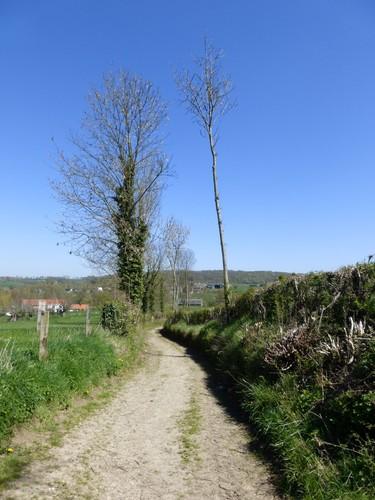 Voeren Sint-Martens-Voeren Holle weg naar Alsbos (3)