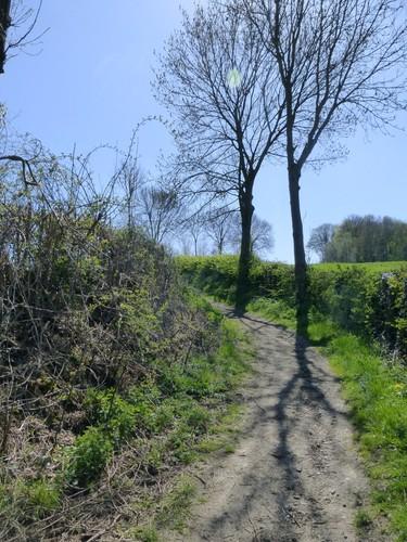 Voeren Sint-Martens-Voeren Holle weg naar Alsbos (2)