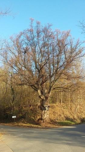 Halen Loksbergen Kapelboom op kruising (1)