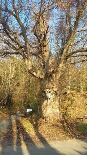 Halen Loksbergen Kapelboom op kruising (2)