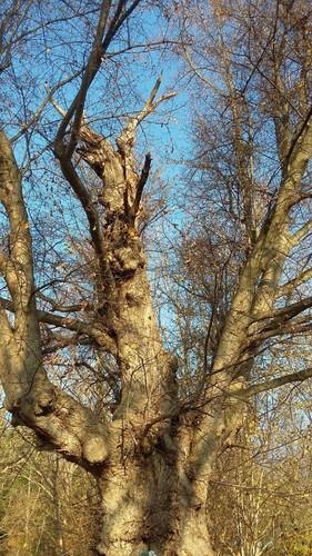 Halen Loksbergen Kapelboom op kruising (4)