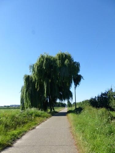 Sint-Truiden Duras Kasteellaan (6)