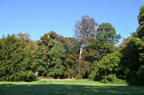 Het Klein Park van Bunswijck met centraal gazon en bomenrand.