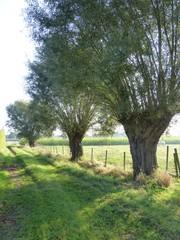 Doorsteekweg naar Beverhoutsveld