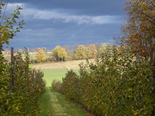 Herfst in Molenbeek-Wersbeek