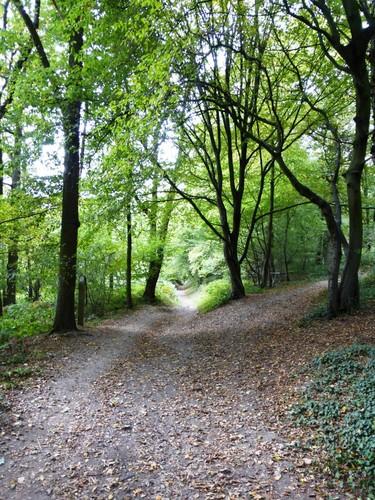 Voeren Teuven holle weg in Nuropperbos