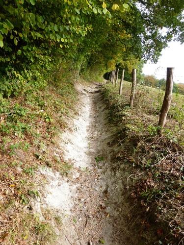 Voeren Teuven holle weg in Nuropperbos met kalkontsluiting