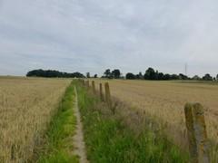 Voetweg naar voorde op Nieuwermolenbeek