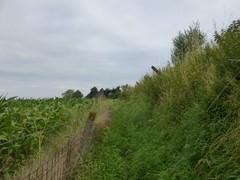Kapelleweg