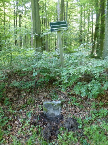 Tervuren Zoniënwoud Herdenkingslinde (5)