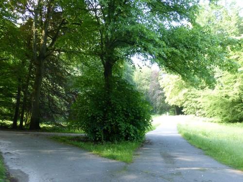 Tervuren Zoniënwoud Herdenkingslinde (1)