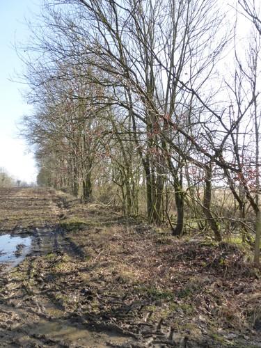 Tongeren, Piringen, trace voormalige spoorweg.