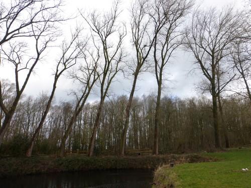 Krater 5 van 27 maart 1916 bij Sint-Elooi (Ieper-Voormezele). Een bomenrij van oude populieren op de perceelsrand.