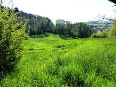 's Gravenvoeren grasland met microreliëf (https://id.erfgoed.net/afbeeldingen/265119)