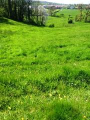 's Gravenvoeren grasland met microreliëf (https://id.erfgoed.net/afbeeldingen/265120)