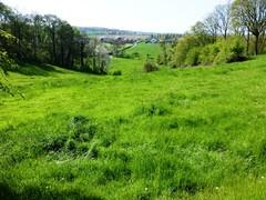 's Gravenvoeren grasland met microreliëf (https://id.erfgoed.net/afbeeldingen/265121)