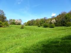 's Gravenvoeren grasland met microreliëf (https://id.erfgoed.net/afbeeldingen/265123)