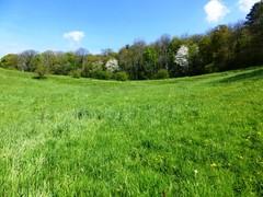 's Gravenvoeren grasland met microreliëf (https://id.erfgoed.net/afbeeldingen/265124)