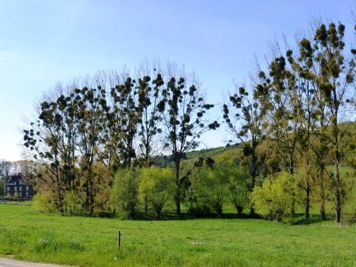 Voeren Ottegraeven houtkant langs de Voerbeek