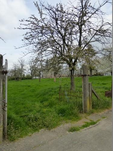 Hek van de hoogstamboomgaard in Brustem-Dorp.