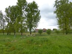Lennik Winkelstraat, zicht op agrarisch landschap (https://id.erfgoed.net/afbeeldingen/266761)