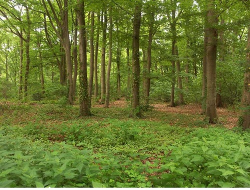 Malle, bossen bij de abdij van Westmalle (1)