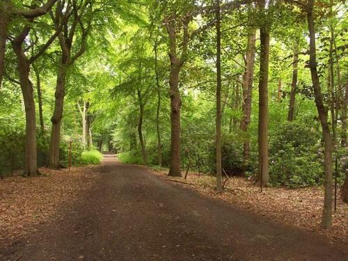Malle, bossen bij de abdij van Westmalle