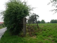Veekeringshaag van meidoorn en barrier bij het relict van een hoogstamboomgaard